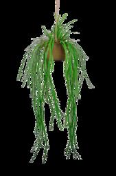 Hængende Plante Verde Med Krukke