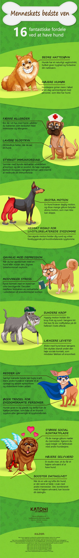 Fordele ved at have hund